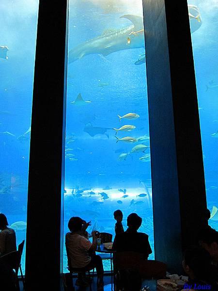 海洋博_7164.jpg