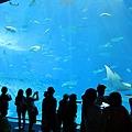 海洋博_7167.jpg