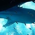 海洋博_7171.jpg