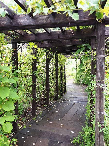 風的花園1108.jpg