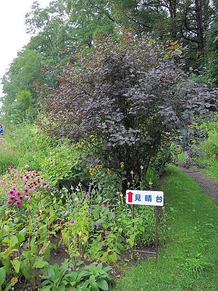 風的花園1158.jpg
