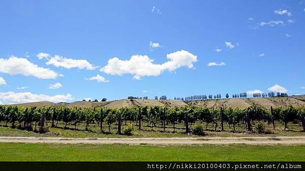 紐西蘭酒莊 (31).JPG