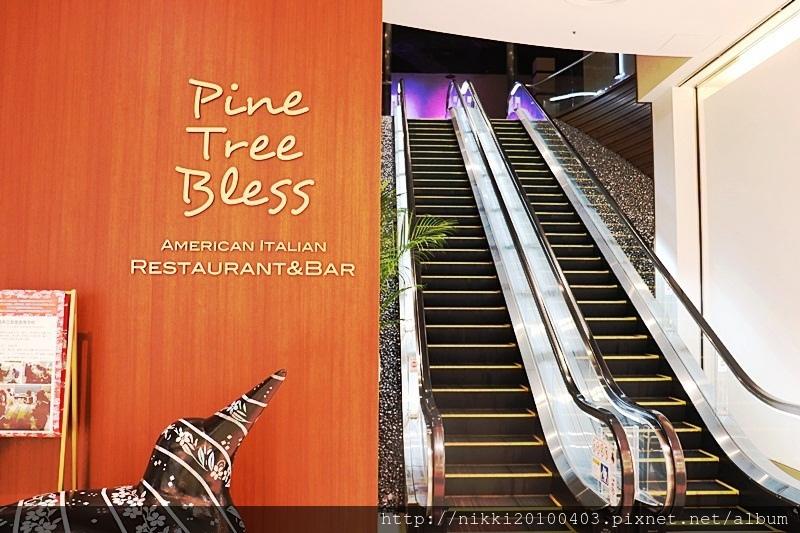 Pine Tree Bless (4).JPG