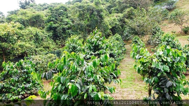 幾度咖啡莊園 (88).JPG