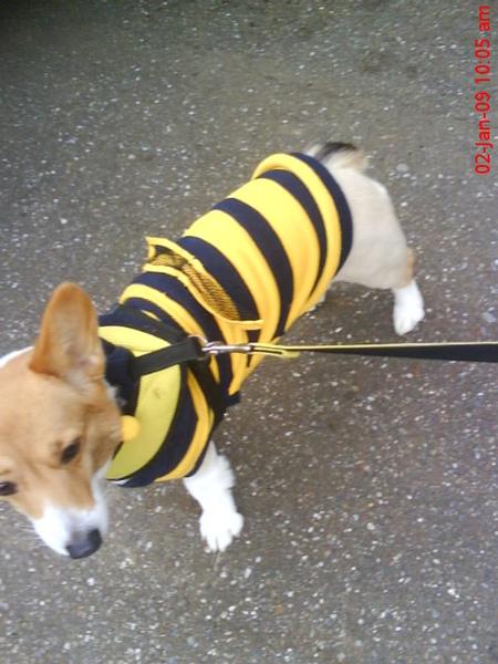 我是小密蜂