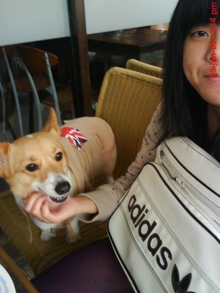 英國狗穿英國裝