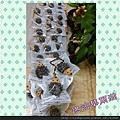 PhotoGrid_1450962408368.jpg