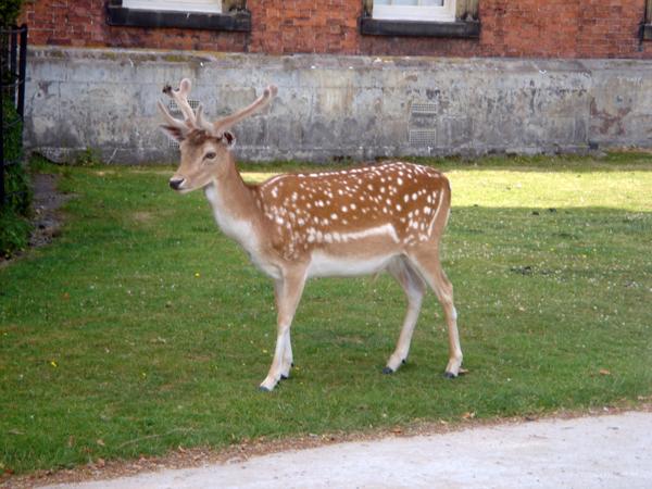 這是真的鹿 完全不怕人耶