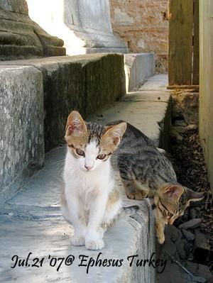 03-cat.jpg