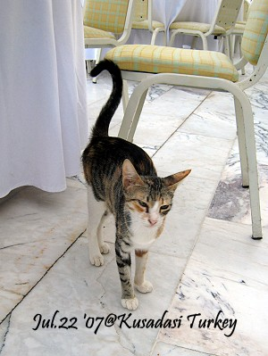 04-cat.jpg