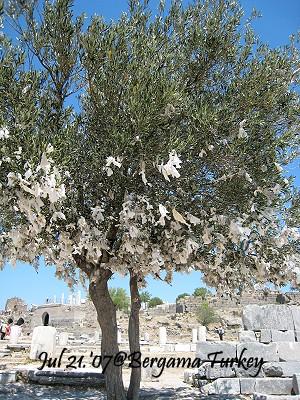 50-oliver tree.jpg