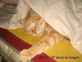 sleepy chobi.JPG