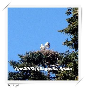 74-送子鳥.jpg