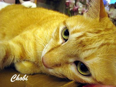Chobi-L3.jpg
