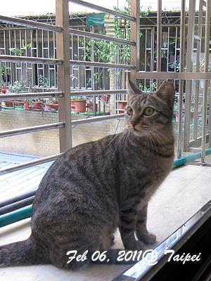 窗台上的貓