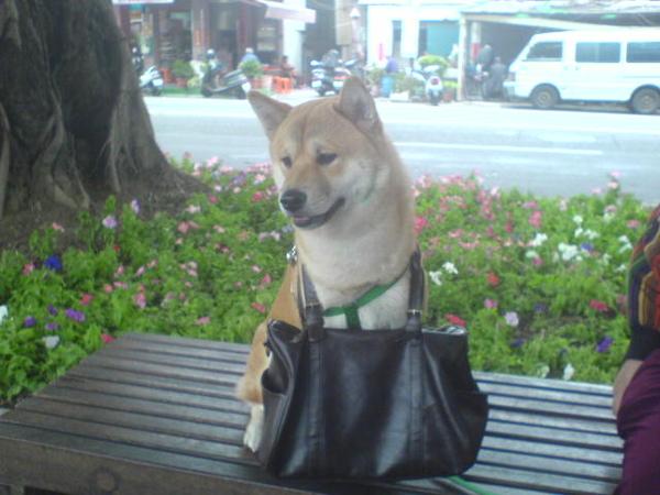 幫我背包包的狗