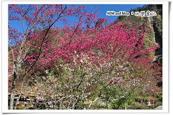 八仙山13.jpg