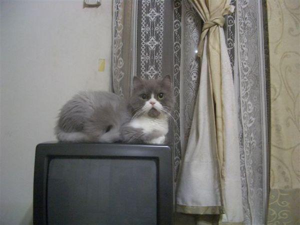 %22這電視是我的!!%22