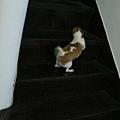 會爬上樓~不會爬下來