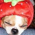 這草莓有點壓到了