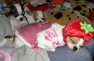 睡著的草莓