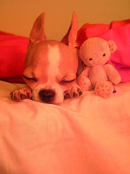 只有睡著是可愛的