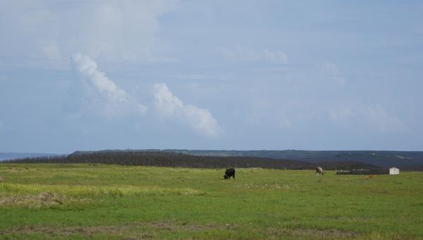 有頭牛在那
