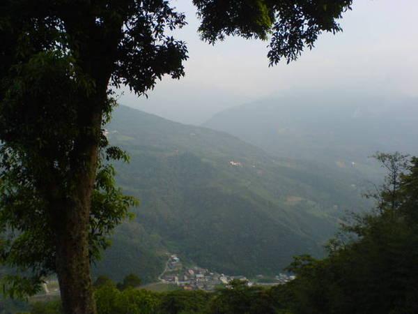 路旁的一棵超大樟樹,在大樹旁遠眺山谷裡的部落