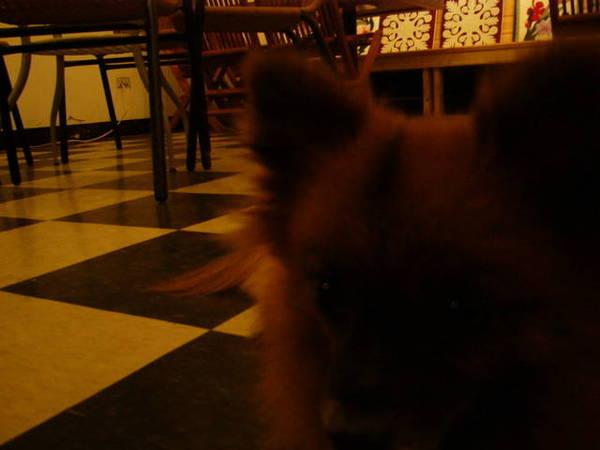 餐廳內的狗臉