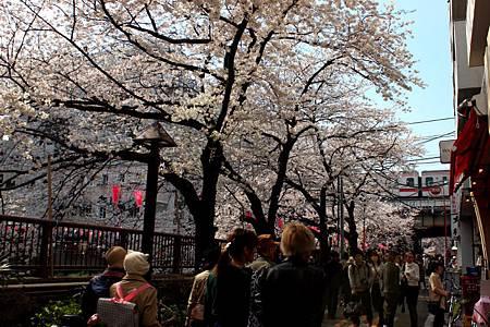 目黒川沿い桜並木.JPG