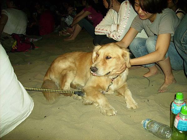超可愛的黃金獵犬~漢堡