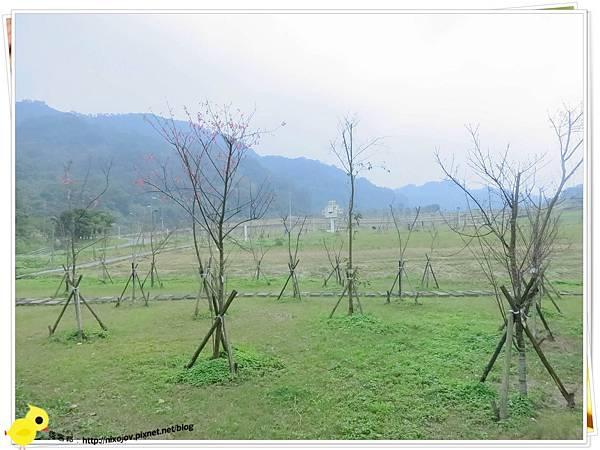 台北-南港山水綠生態-山豬窟化身成池畔木屋-風景