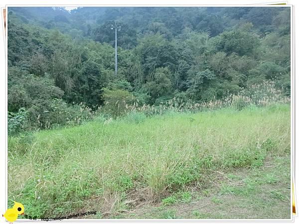 台北-南港山水綠生態-山豬窟化身成池畔木屋-稻草原