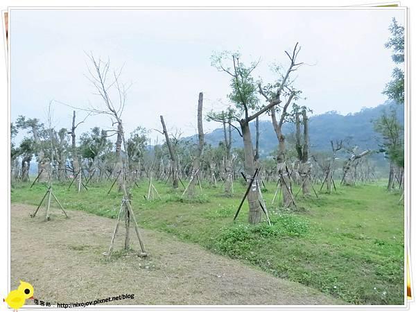 台北-南港山水綠生態-山豬窟化身成池畔木屋-樹木