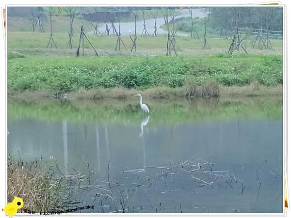 台北-南港山水綠生態-山豬窟化身成池畔木屋-海鷗