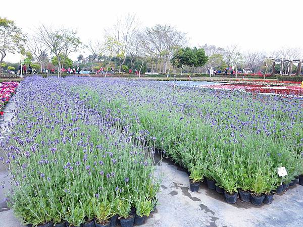 【彰化】溪州花博公園-美麗的費茲洛公園