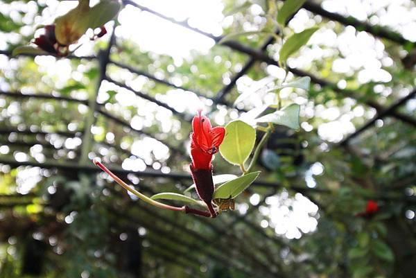 【桃園旅遊景點】桃源仙谷-桃園山中的世外桃源