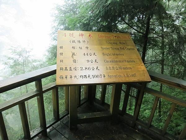 【宜蘭旅遊】馬告生態公園神木園-千年歲月,歷史見證