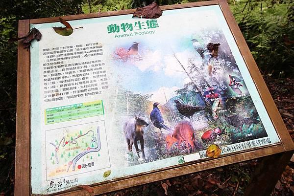 【宜蘭旅遊】棲蘭國家森林遊樂區-馬告森林遊樂區