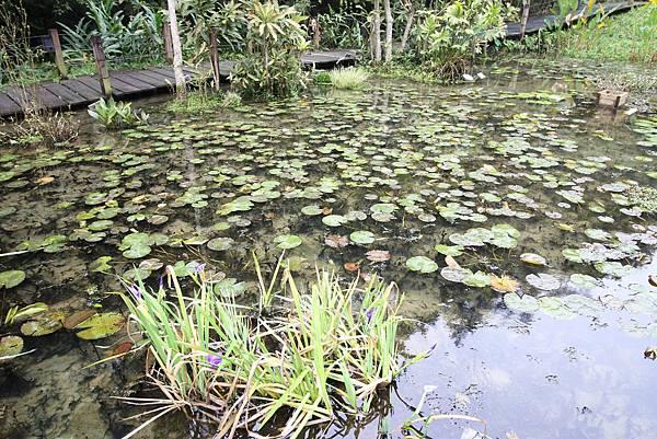 【新竹旅遊】綠世界生態農場-可愛動物互動農場