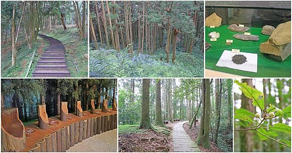 【桃園旅遊】東眼山森林遊樂區-夏日消暑山林避世小旅遊