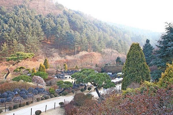 【韓國旅遊】晨靜樹木園-美麗花朵覆蓋的美麗庭園-附交通方式及班次