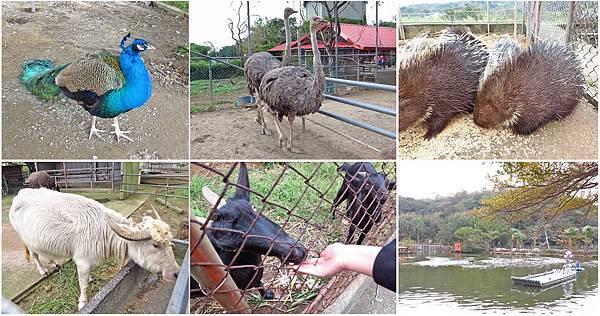 【台北旅遊】台灣山豬城-隱藏深山中的親子農場