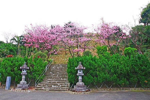 【台北櫻花】北投善光寺櫻花盛開-離市區不到五分鐘的路程就能賞櫻花