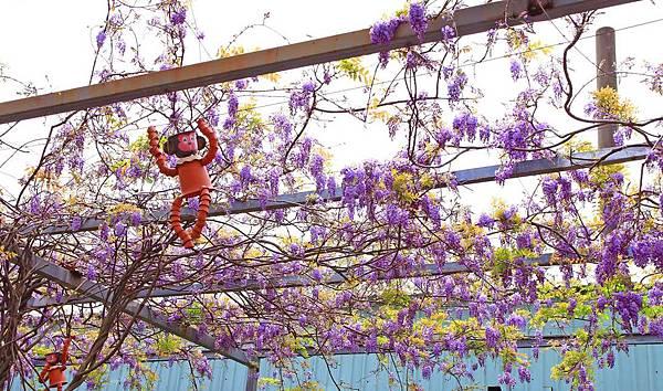 【台北景點】台北花卉村-免門票就能看到美麗紫藤花
