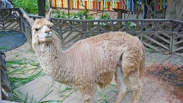 【桃園景點】羊世界牧場-有如一座小型動物園,還可以餵羊的好玩親子景點
