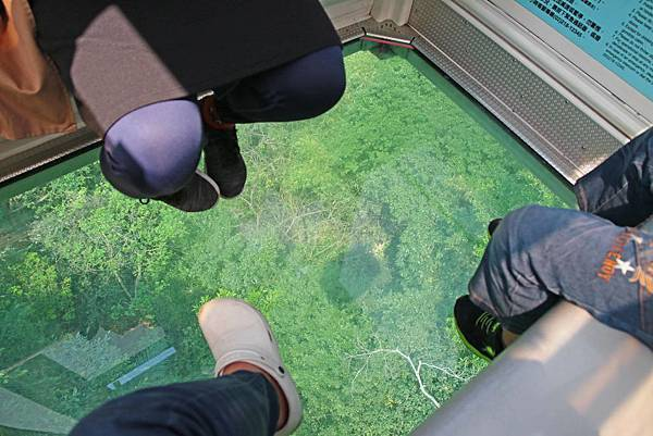 【台北必玩一日遊行程!】台北動物園+貓空纜車+通化夜市-國內外最受歡迎必玩好玩的台北旅遊景點