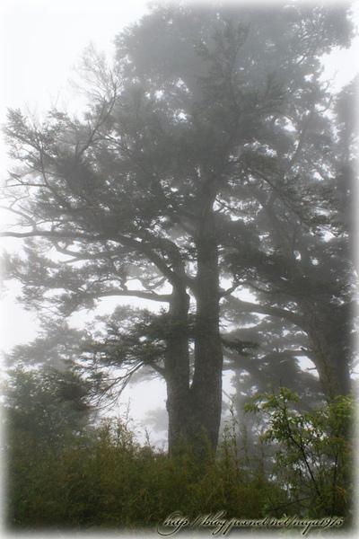 0602003.jpg