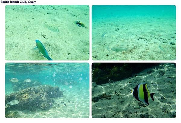 PIC海中的魚