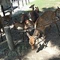 小鹿們都躲起來不敢在大街上